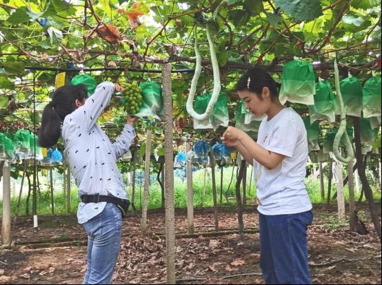 南财学子三下乡:调研葡萄产业,助力乡村振兴